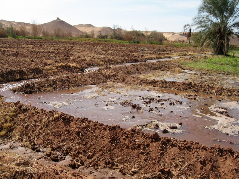Field irrigation, Dakhla